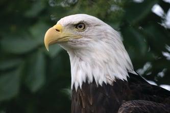 ThinkstockPhotos-Eagle-Blog