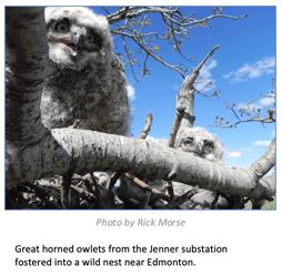 WM-Owl-Blog-PhotoCredits2